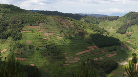 Terraced landscape on the edge of the Bwindi National Park Uganda